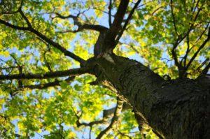 boom in de natuur